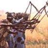 Des femmes moissonnent en Gambie