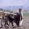 Afghan farmer preparing his field