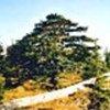 Forêts de cêdres au Liban