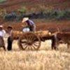 La récolte des céréales au Myanmar