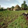 支持非洲农业发展