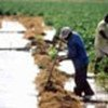 Farmers and other local groups play a key role
