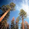 Forests store CO<sup>2</sup> helping alleviate climate change