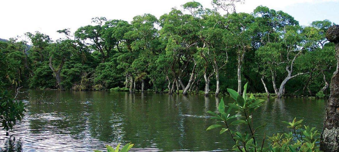 Mikoko baharini