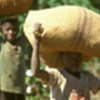 Agriculture accounts for 70 percent of child labour worldwide