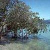 Les mangroves protègent les zones côtières contre l'érosion, les cyclones et le vent.