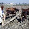 Un agriculteur égyptien laboure un champ avant de planter.