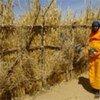 Des femmes du Darfour.