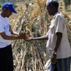 WFP expands food assistance to Ethiopia