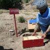Landmine clearning