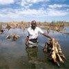 Inondations de cultures en Afrique australe.