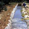 Irrigation dans le sud de la Tunisie