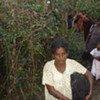 Des civils tentant de fuir le conflit au Sri Lanka