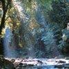 Une réserve de biosphère au Brésil