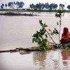 La montée du niveau de la mer causée par le changement climatique entraînera le déplacement de millions à travers le monde.