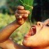 Un petit garçon boit de l'eau à l'aide d'une feuille d'arbre