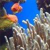 Les récifs coraliens sont menacés par le changements climatique et l'acidification des océans.