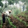Farmers control soil erosion through crop cultivation