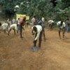 Travaux de réhabilitation de routes à Plantain Island, en Sierra Leone.