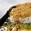Africa could be a global player in bulk commodities such as rice and cotton
