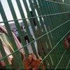 Solicitantes de asilo<br>en Lampedusa