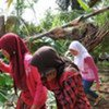 At least 64 people people were killed and another 25,000 uprooted by the 2 September, 2009 quake off West Java