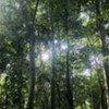 Forêt en République démocratique du Congo (RDC)