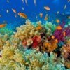 Healthy Oceans New Key to Combating Climate Change