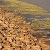 Une ville du Cameroun au bord du Lac Tchad