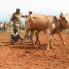 Des fermiers en République démocratique du Congo (RDC).