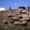 Plus d'un million de personnes sont affectées par la sécheresse en Syrie.