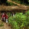 Un fermier dans la région de Brong Ahafo, au Ghana.