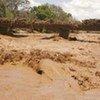 Une zone inondée le long de la rivière Ewaso Nyiro, au Kenya.