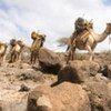 Climate change threatens Africa