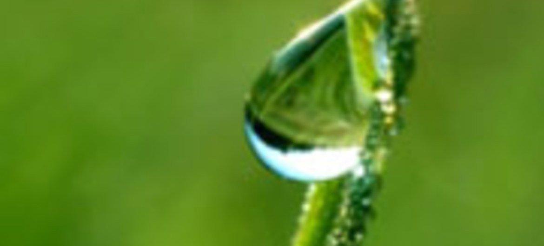 L'agriculture peut jouer primordial pour faire face au changement climatique en offrant des solutions basées sur la nature
