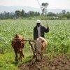 A farmer tilling his fields in Ethiopia