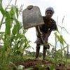 Un fermier cultive son champ au Zimbabwe.