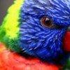 Un des nombreux oiseaux pouvant être surveillé grâce au nouvel outil de la CITES.