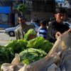 Vegetables on sale on a donkey cart in Gaza