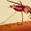 伊蚊通过叮咬传播疾病  联合国图片