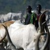 Some 70 per cent of the world's rural poor rely on livestock as an important component of their livelihoods