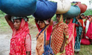 Rural women face increasing inequality in agricultural employment