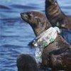 Unos 20 millones de toneladas de plásticos terminan en el mar cada año. Foto de archivo: British Antarctic Survey