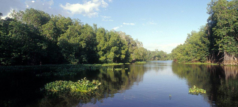 危地马拉一处自然保护区内的红树林。