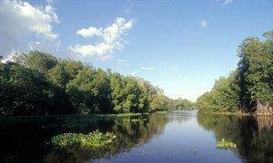 Bosque de manglares en una reserva natural en Guatemala
