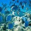 联合国教科文组织世界遗产委员决定将伯利兹堡礁保护区(Belize Barrier Reef Reserve Network)从《世界濒危遗产名录》中移除。