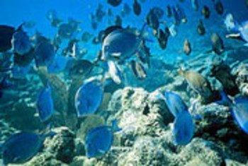 A barreira de corais de Belize estava na Lista de Patrimônio Mundial em Perigo desde 2009.
