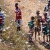Des criquets dans le sud-ouest de Madagascar.