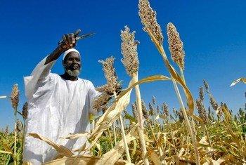 Un agriculteur au Soudan.