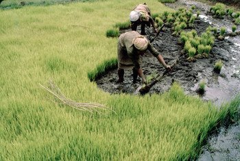 Une exploitation agricole à Madagsacar.